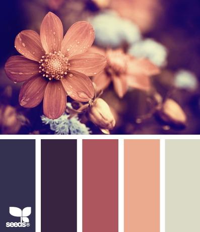 seeds color 3 世界上最优雅的配色