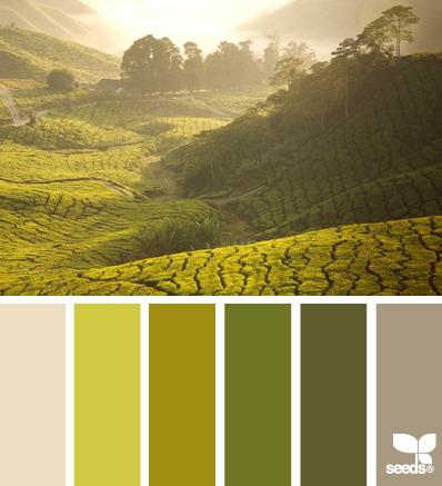 seeds color 8 世界上最优雅的配色