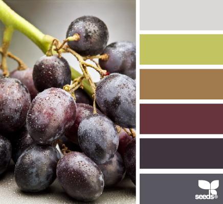 seeds color 10 世界上最优雅的配色